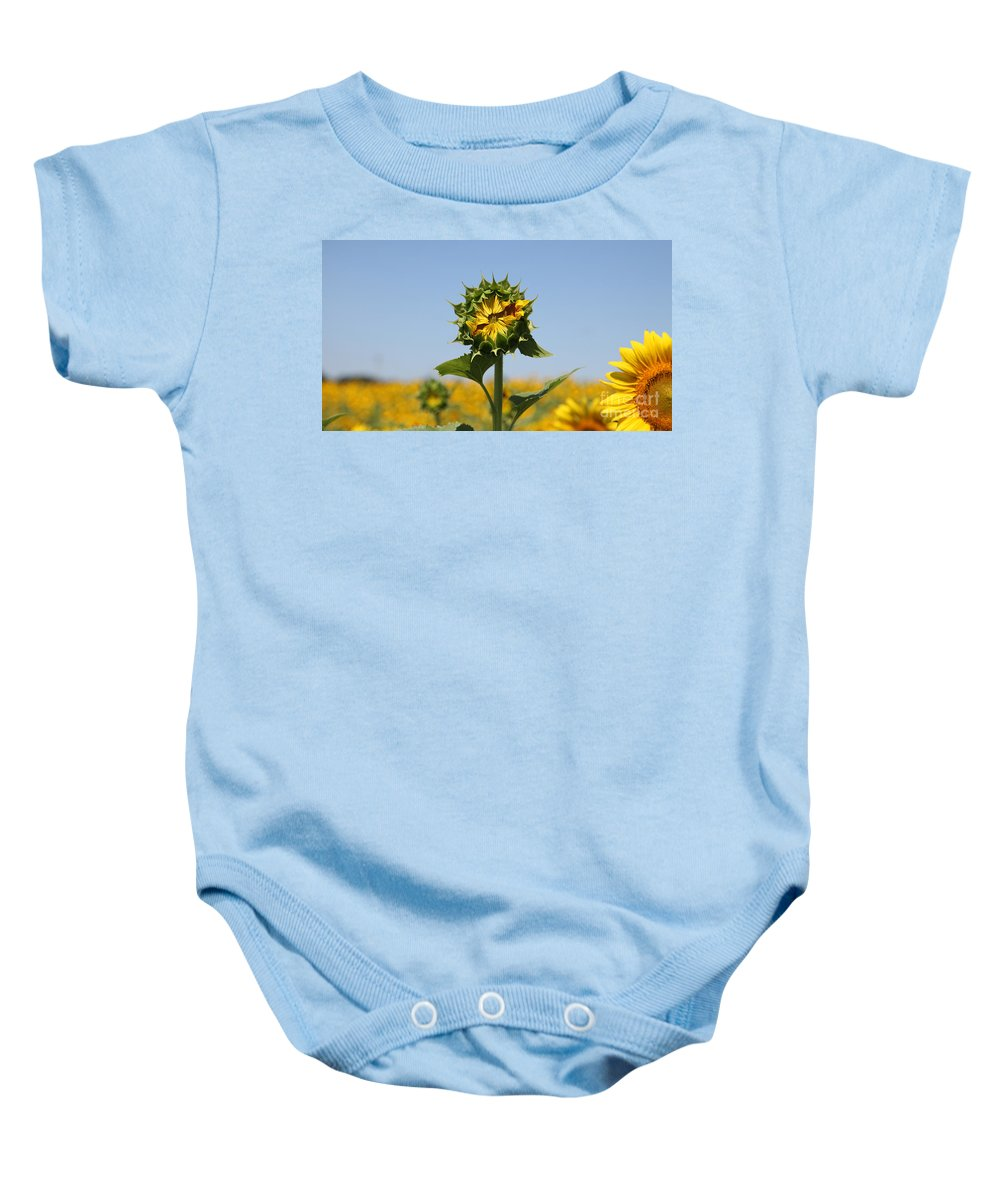 Sunflowers Baby Onesie featuring the photograph Competition by Amanda Barcon
