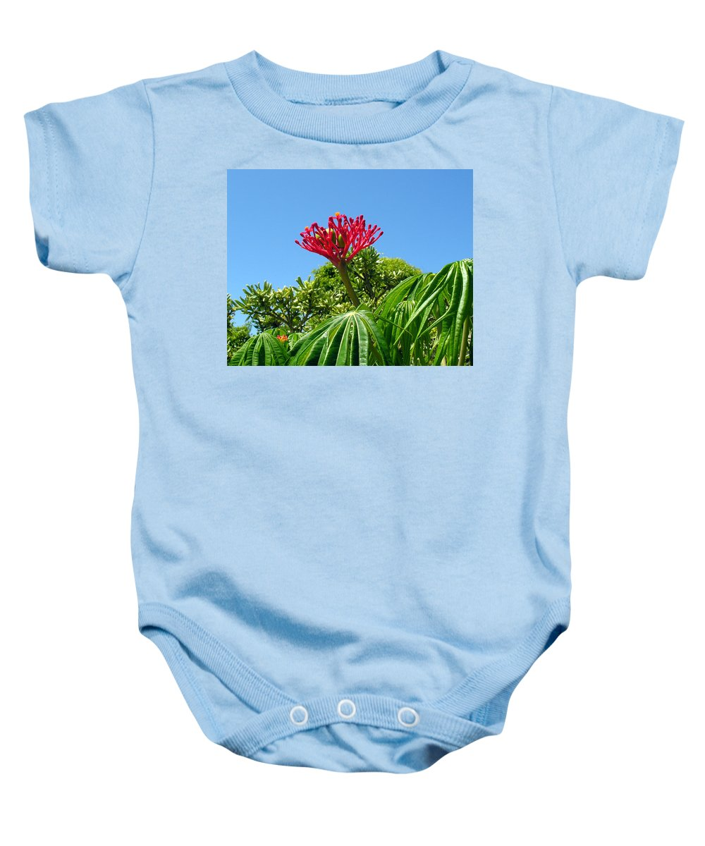 Coral; Bush; Coralbush; Weed; Flower; Leaf; Leaves; Fruit; Nut; Seed; Florida; Wild; Vacant; Lots; N Baby Onesie featuring the photograph Coral Bush With Flower And Fruit by Allan Hughes