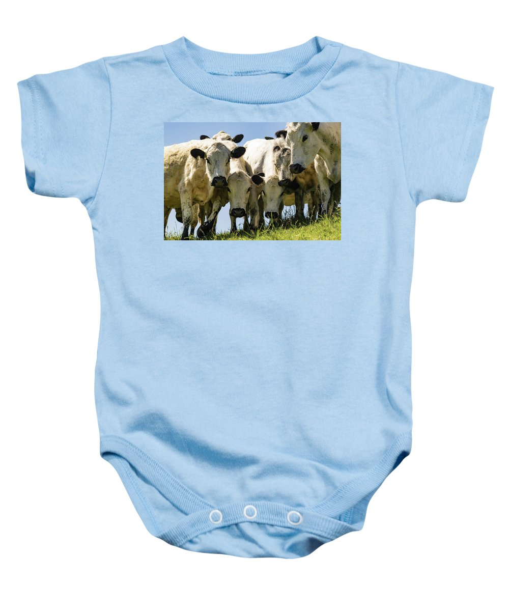 Cows Baby Onesie featuring the photograph Cows by Warren Bourne