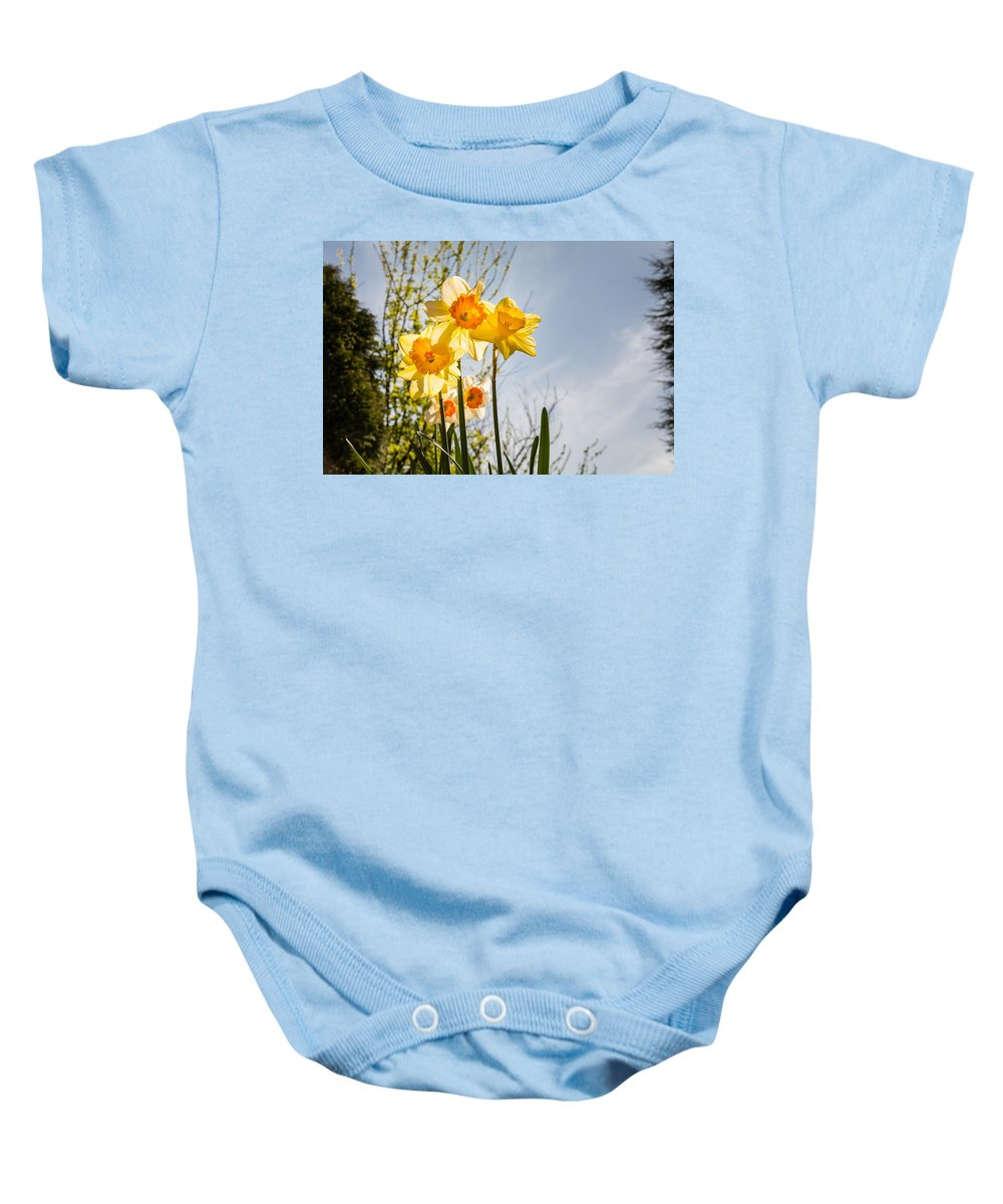 Backlit Baby Onesie featuring the photograph Daffodils Backlit by David Head