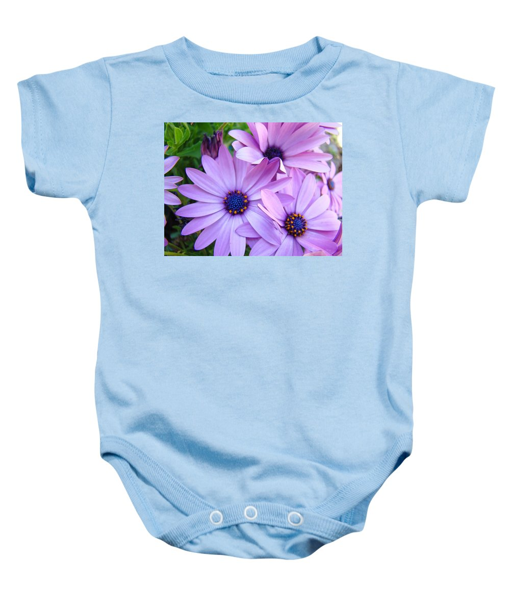 Daisy Baby Onesie featuring the photograph Daisies Lavender Purple Daisy Flowers Baslee Troutman by Baslee Troutman
