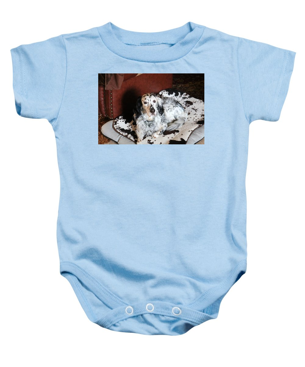 Dog Baby Onesie featuring the photograph English Setter Lay by Paris Zambounides