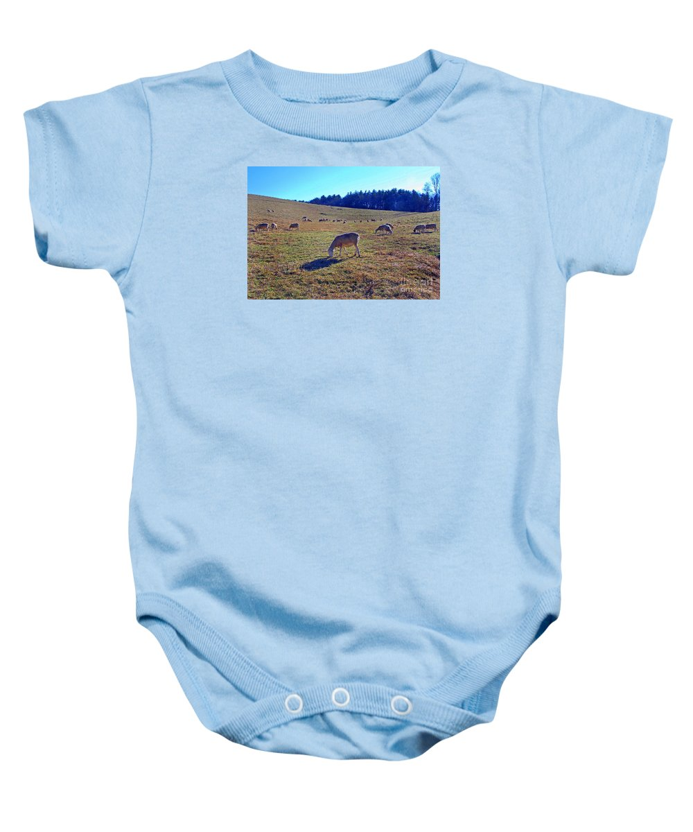 Scenic Tours Baby Onesie featuring the photograph Field Of Ewes by Skip Willits