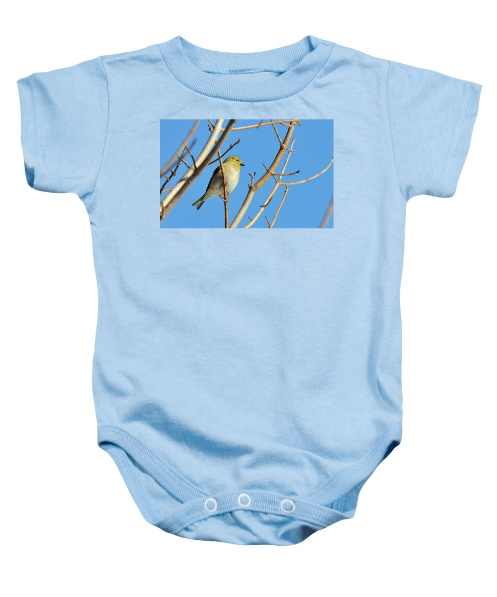 Finch Baby Onesie featuring the photograph Finch by David Arment