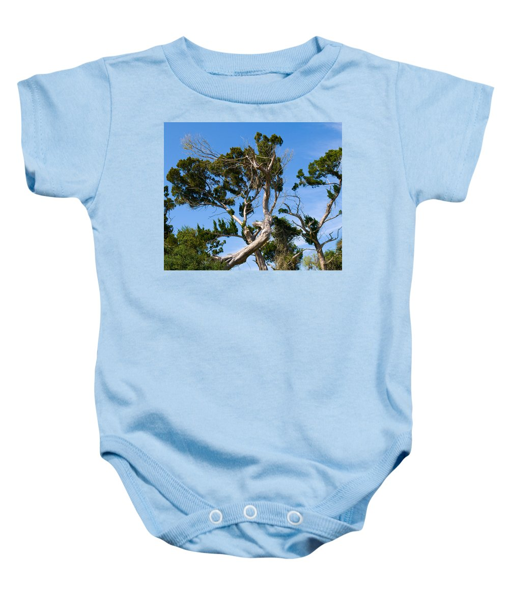 Cedar; Cedars; Tree; Florida; Timucuan; Indian; Mound; Shell; Midden; Oak; Hill; Flora; Branch; Weat Baby Onesie featuring the photograph Florida Cedar Tree by Allan Hughes