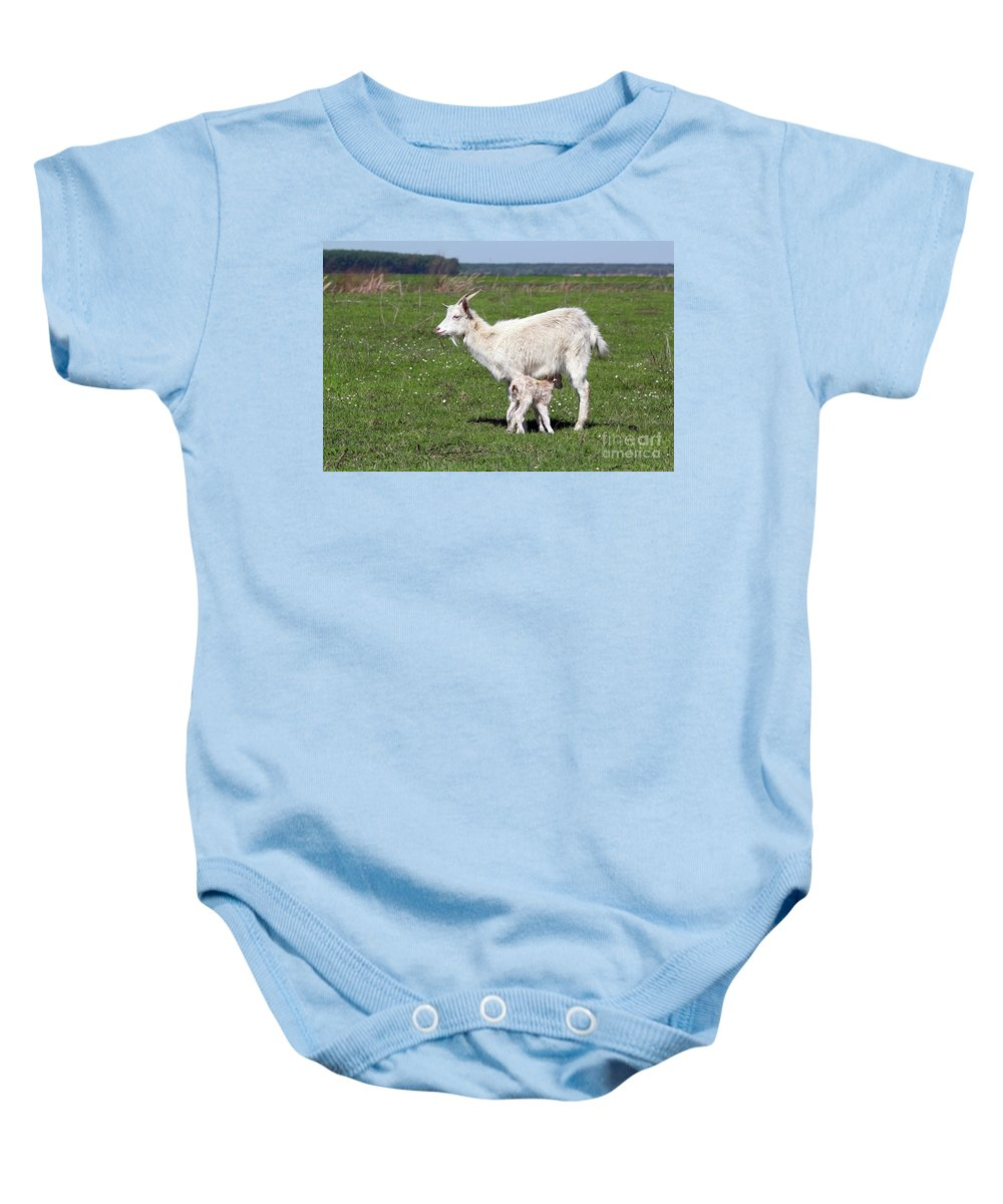 Kiddy Baby Onesie featuring the photograph Goat With Just Born Little Goat Spring Scene by Goce Risteski