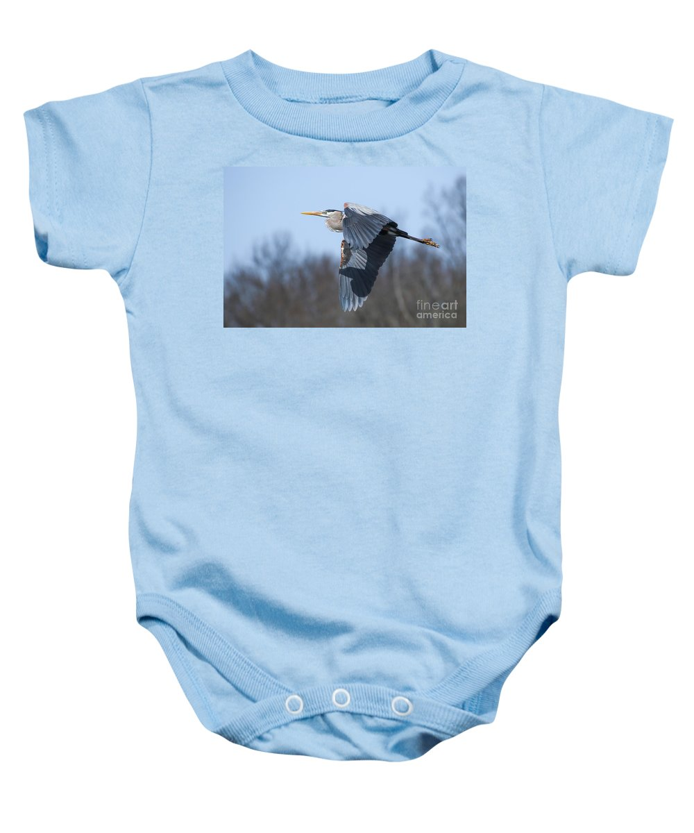 Great Blue Heron Baby Onesie featuring the photograph Great Blue Heron In Flight by Susan Grube