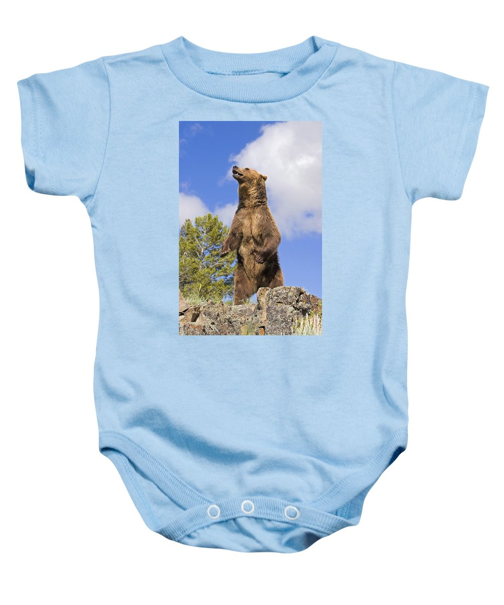 Animals Baby Onesie featuring the photograph Grizzly Bear Standing On A Ridge by John Pitcher