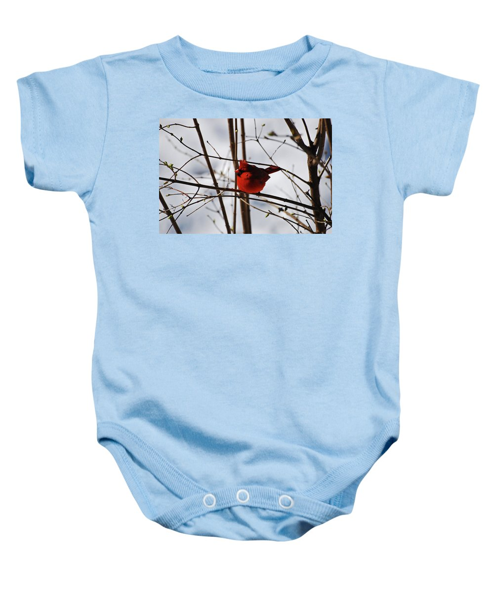 Cardinal Baby Onesie featuring the photograph I'm Feeling Rather Red Today by Lori Tambakis