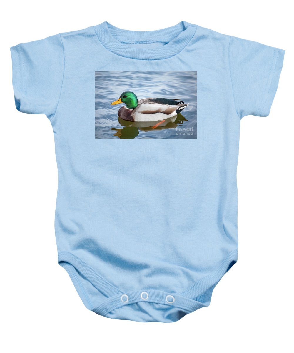 Animals Baby Onesie featuring the photograph Mallard Swimming by Leslie Banks
