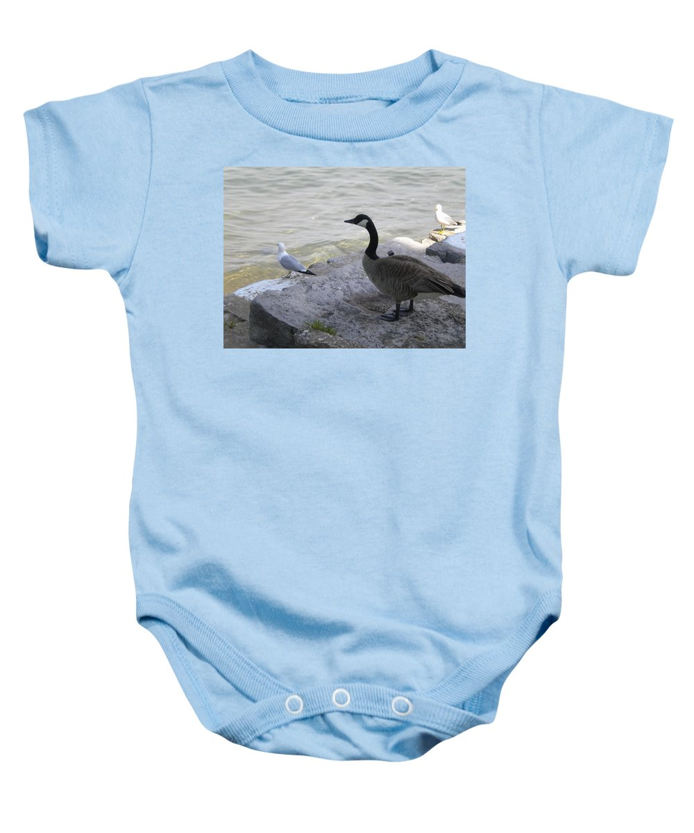 Birds Baby Onesie featuring the photograph On The Lakefront by Jan Gilmore