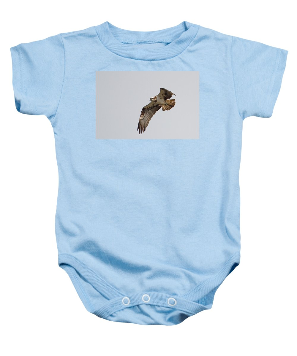 Osprey Baby Onesie featuring the photograph Osprey Aloft by Bob Kemp