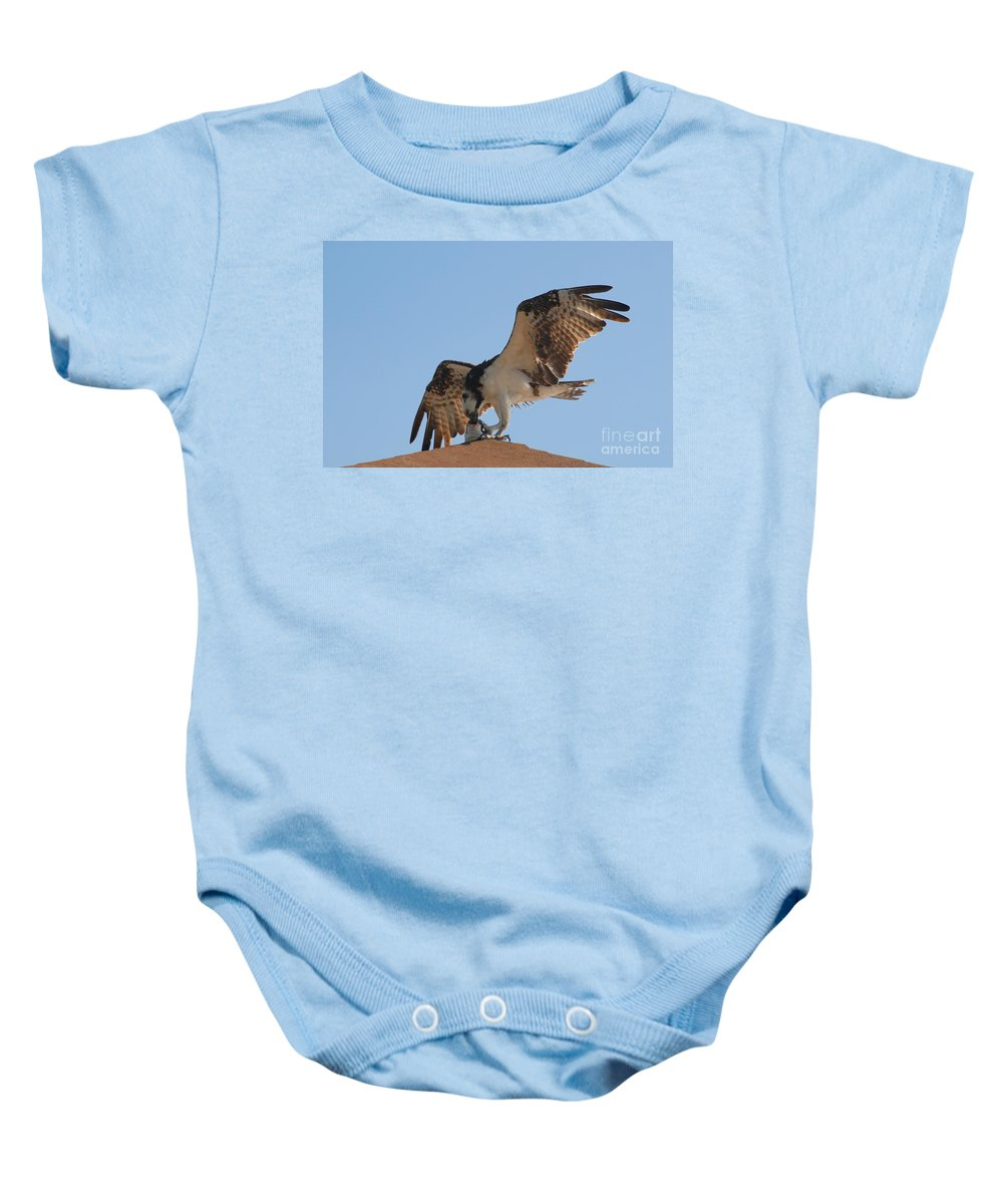 Osprey Baby Onesie featuring the photograph Osprey by David Lee Thompson