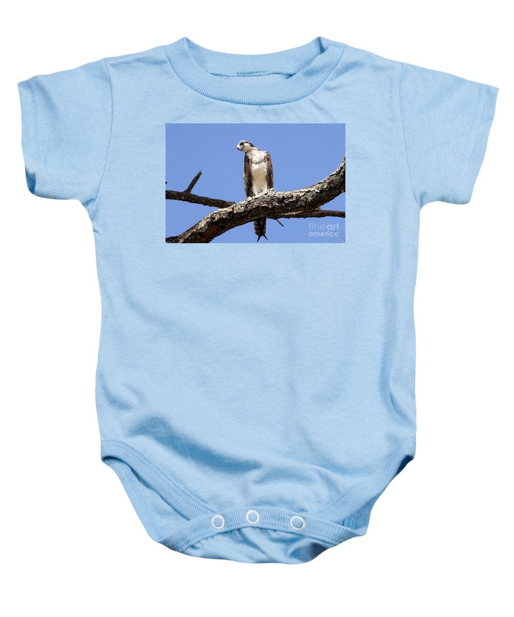 Osprey Baby Onesie featuring the photograph Osprey In The Trees by David Lee Thompson