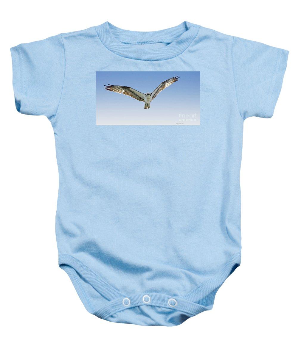 Osprey Baby Onesie featuring the photograph Osprey Soar Search by Deborah Benoit