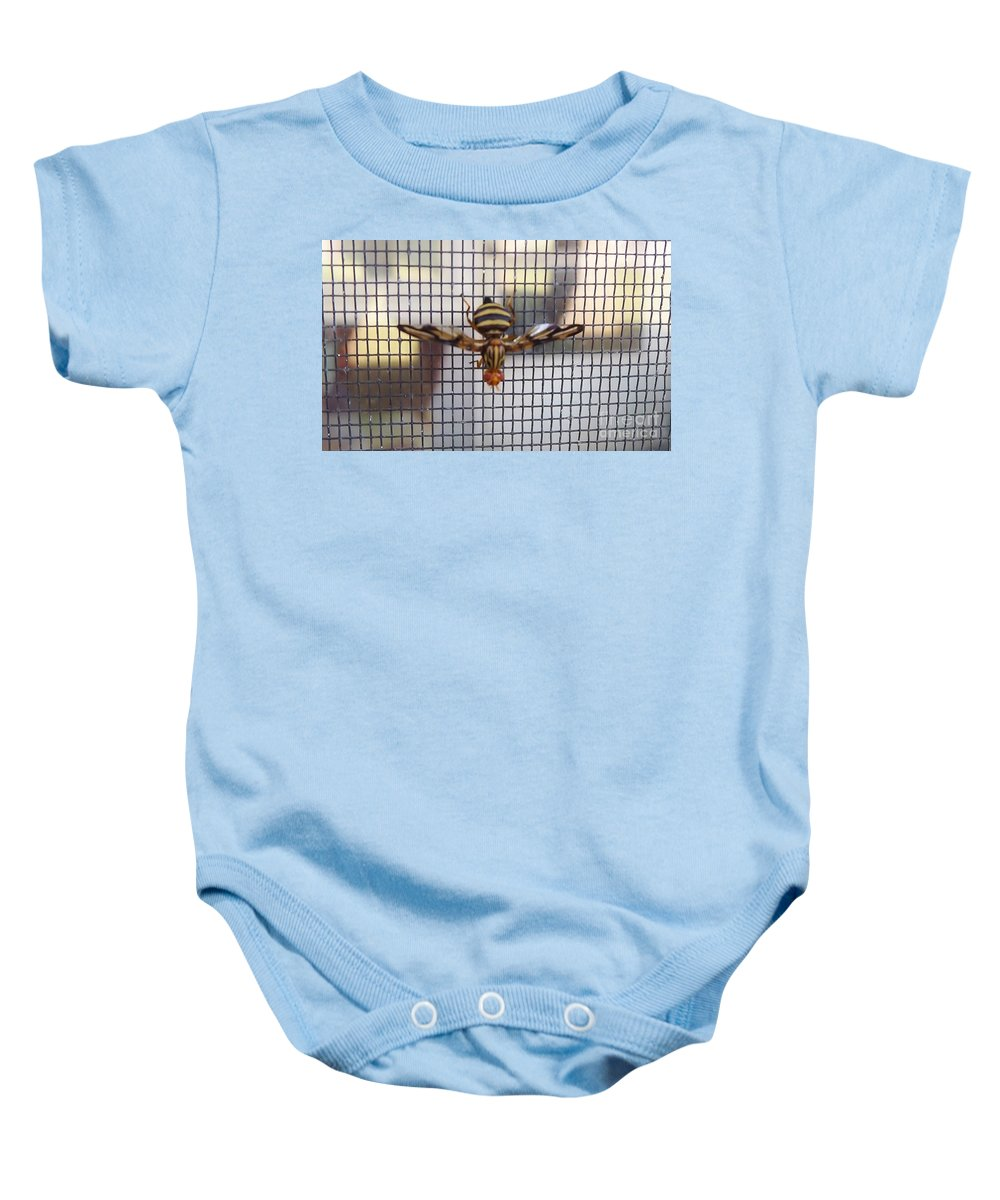 Fly Baby Onesie featuring the photograph Picture Winged Bee Fly On Screen   Spring   Indiana by Rory Cubel