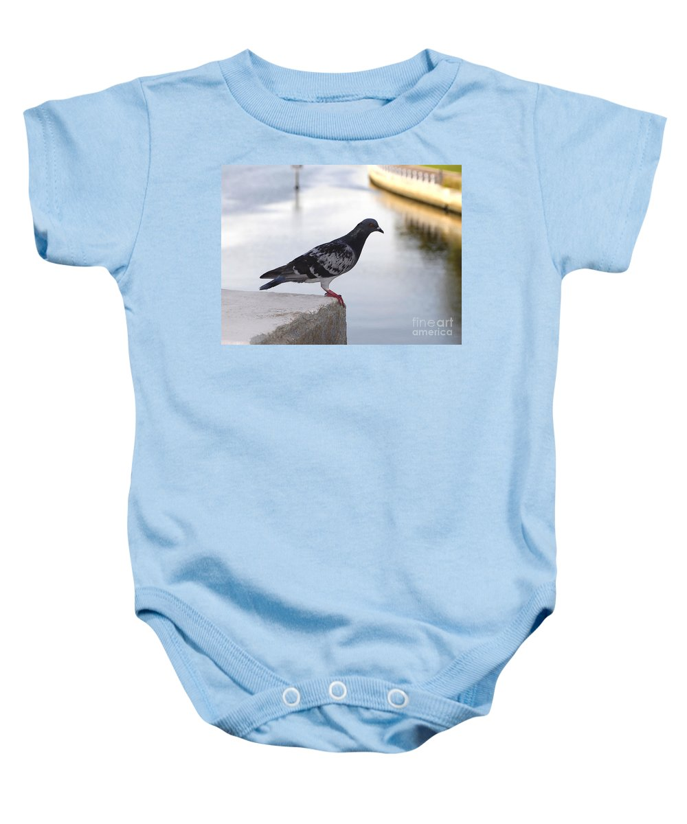Pigeon Baby Onesie featuring the photograph Pigeon By The River by David Lee Thompson