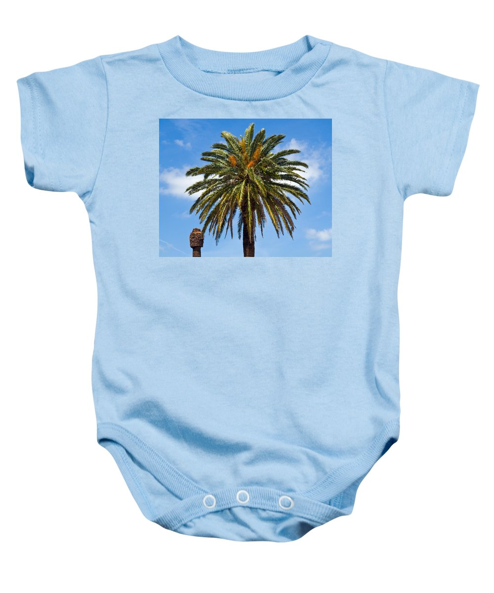 Palm; Tree; Royal; Queen; Scepter; Florida; Frond; Saw; Palmetto; Branch; Wave; Wind; Breeze; Scrub; Baby Onesie featuring the photograph Royal Palm In Florida by Allan Hughes