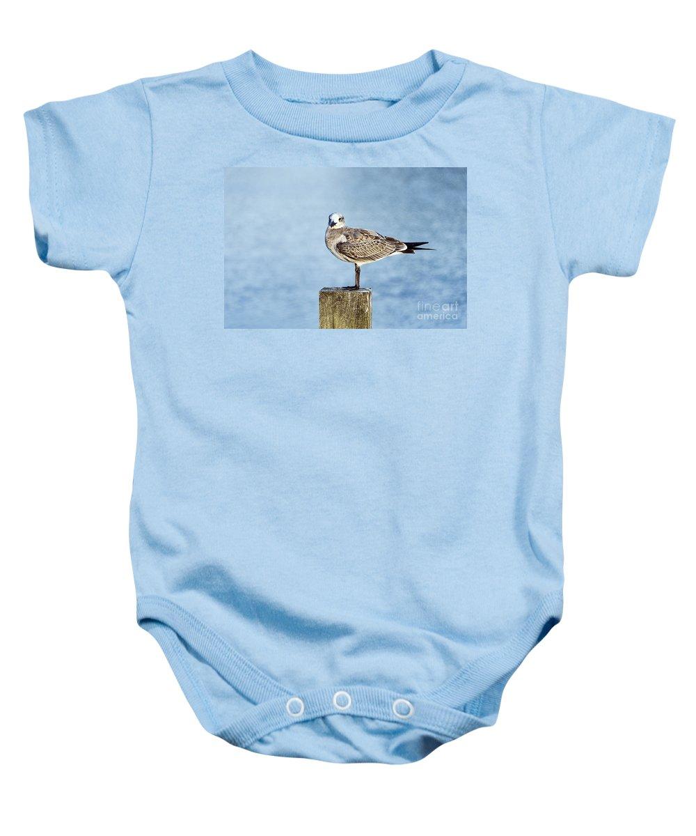 Corolla Baby Onesie featuring the photograph Shorebird by John Greim