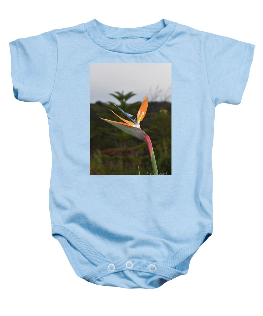 Bird-of-paradise Baby Onesie featuring the photograph Side View Of A Beautiful Bird Of Paradise Flower by DejaVu Designs