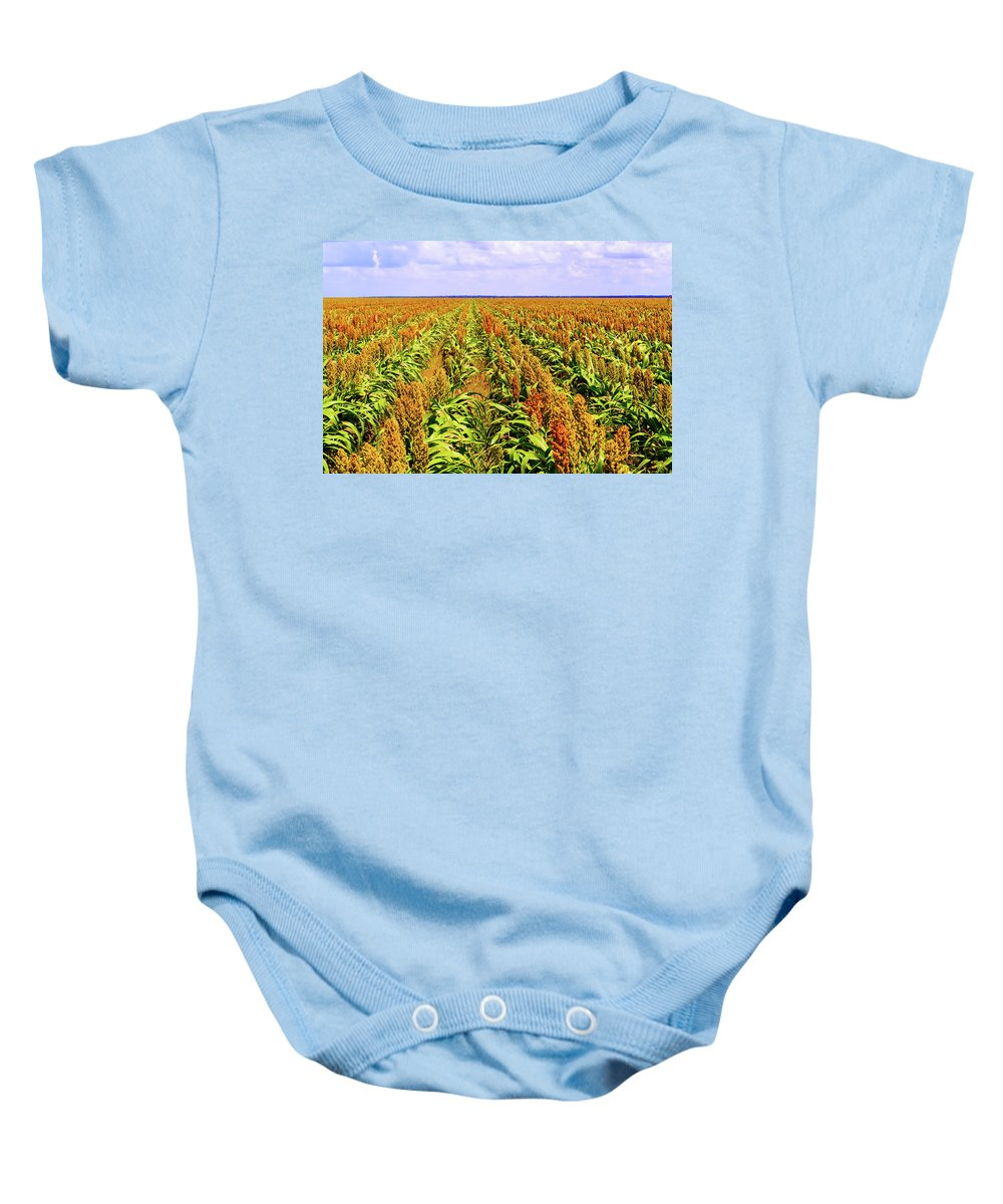Botswana Baby Onesie featuring the photograph Sorghum Plants Fields In Botswana by Marek Poplawski