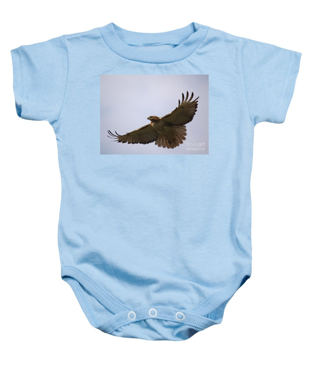 Hawk Baby Onesie featuring the photograph Taking Survey by Robert Pearson