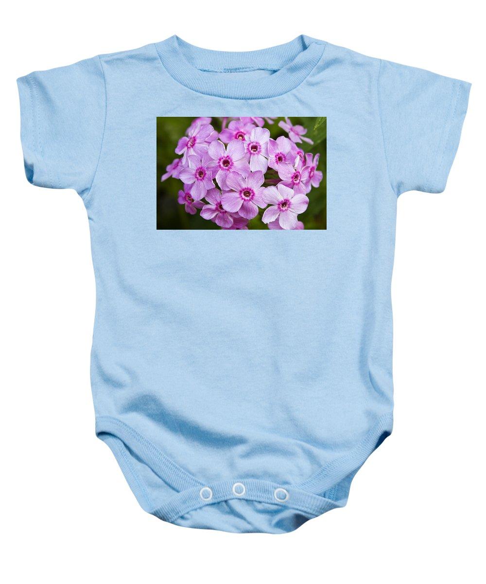 Phlox Baby Onesie featuring the photograph Tall Garden Phlox by Teresa Mucha