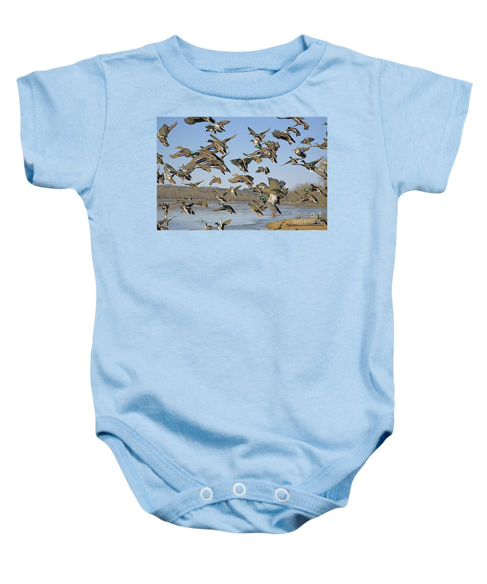 Ducks Baby Onesie featuring the photograph The Mad Rush by Robert Pearson