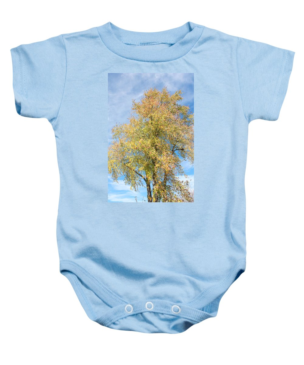 Tree Baby Onesie featuring the photograph Town Tree by Jane Merrit