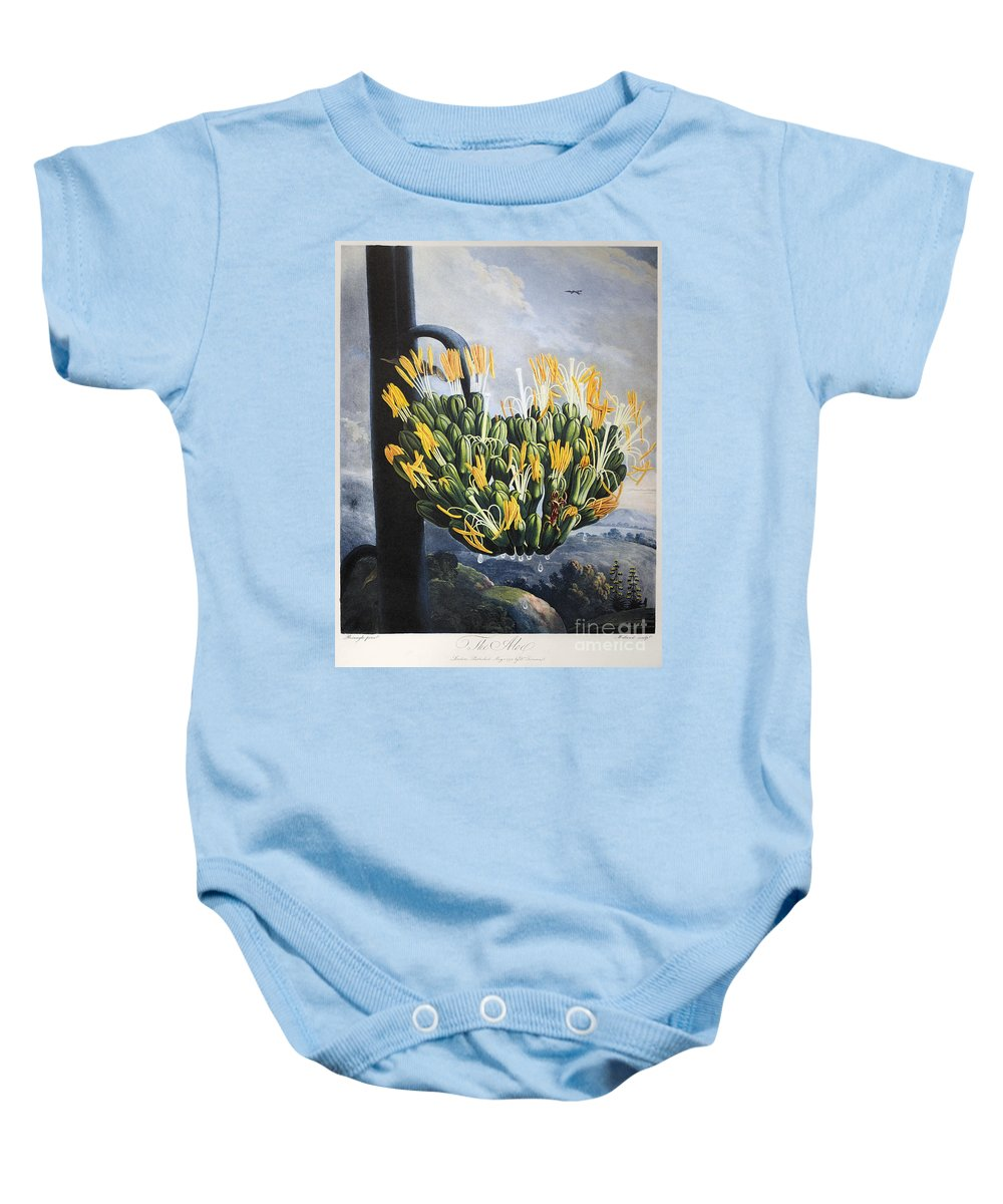 1798 Baby Onesie featuring the photograph Thornton: Aloe by Granger