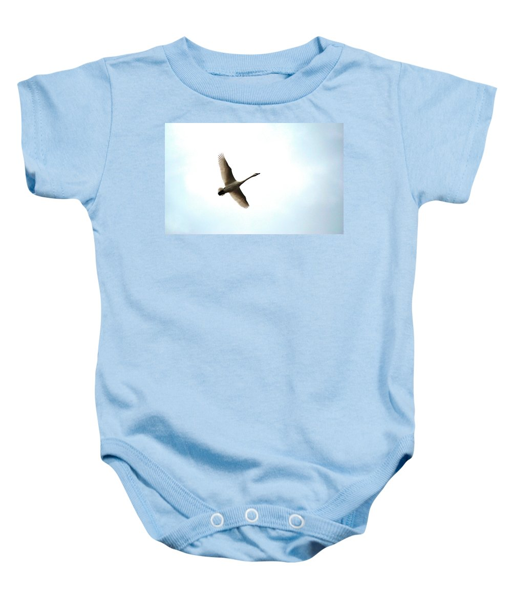 Goose Baby Onesie featuring the photograph Trumpeter Swan In Flight by Brian O'Kelly