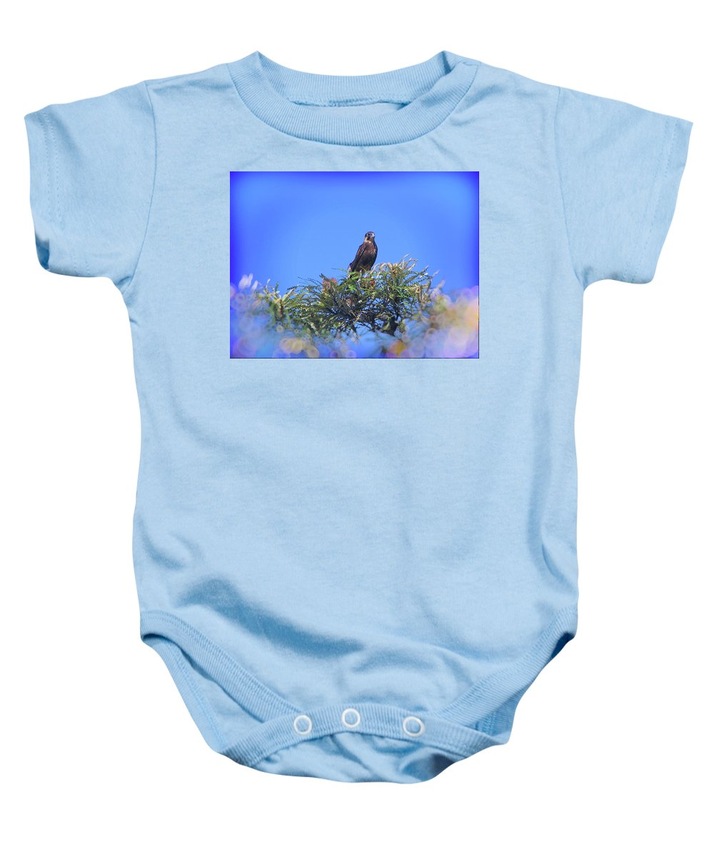 Falcon Baby Onesie featuring the photograph Watchful Eye by Douglas Barnard