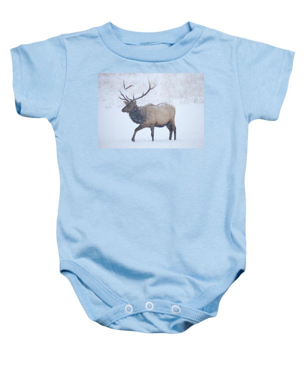 Elk Baby Onesie featuring the photograph Winter Bull by Mike Dawson
