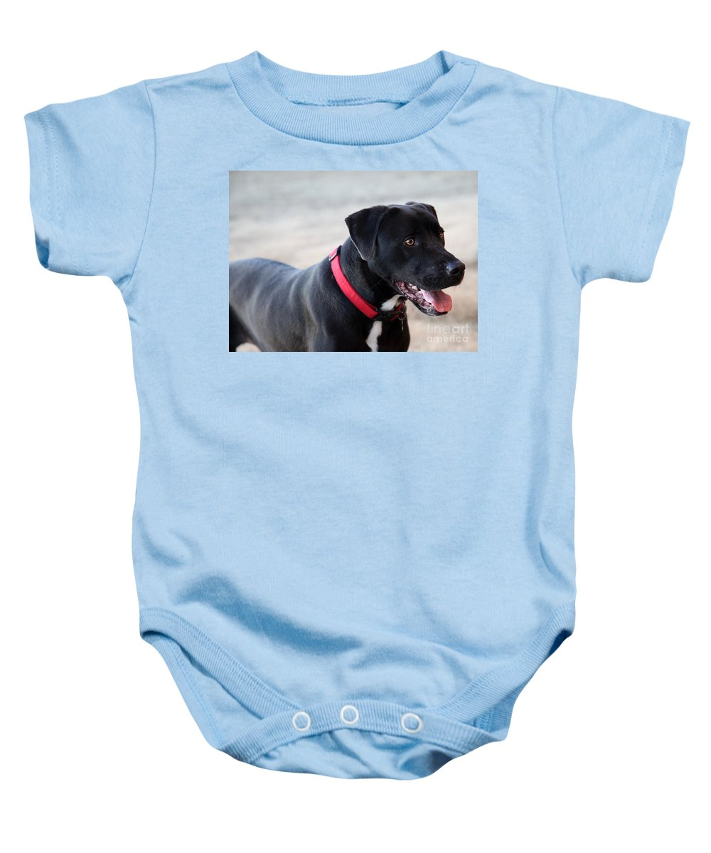 Dogs Baby Onesie featuring the photograph Yes I Want To Play by Amanda Barcon