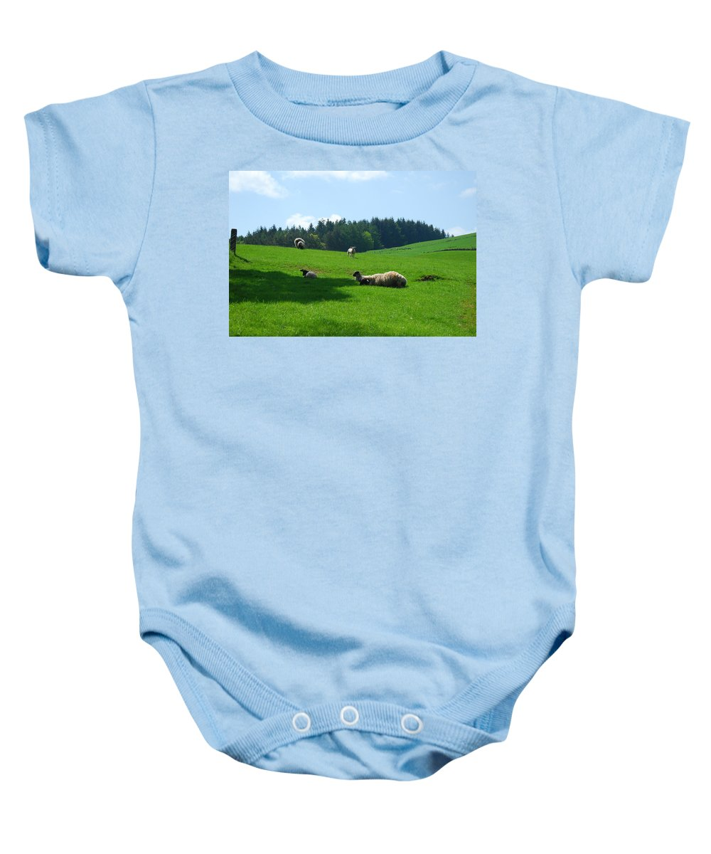 Sheep Baby Onesie featuring the photograph Sheep And Lambs In A Field by Victor Lord Denovan
