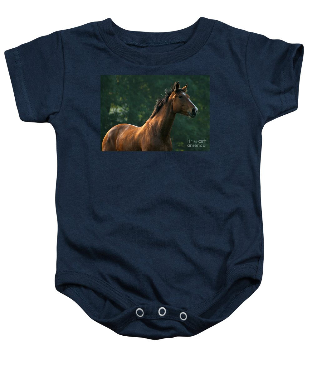 Horse Baby Onesie featuring the photograph The Observer by Angel Tarantella