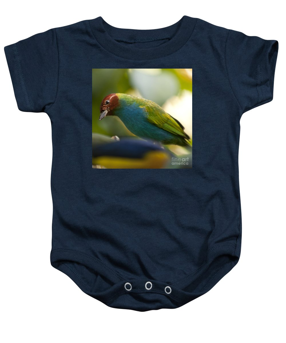 Tanager Baby Onesie featuring the photograph Bay-headed Tanager - Tangara Gyrola by Heiko Koehrer-Wagner