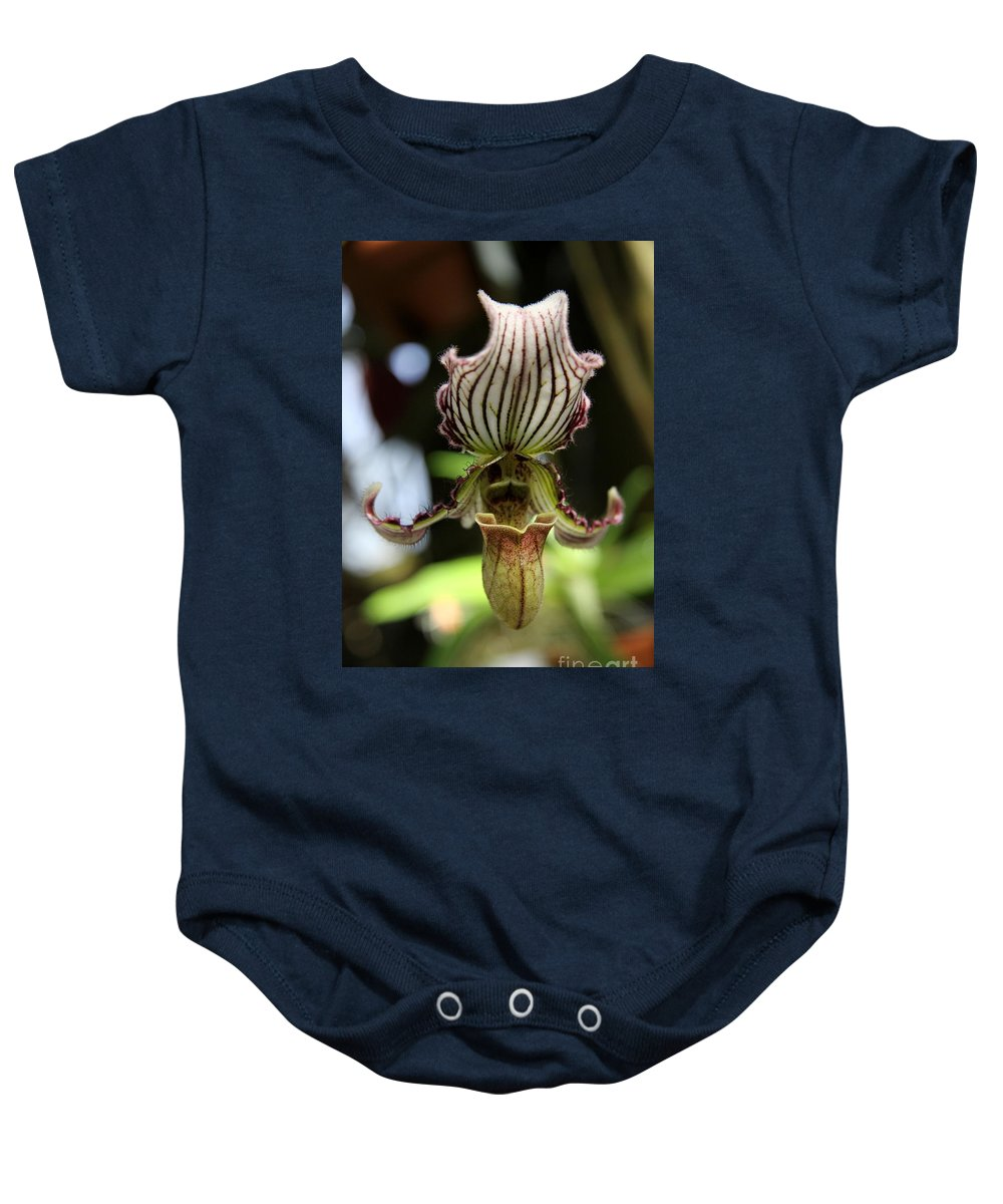 Lady Slipper Baby Onesie featuring the photograph Beautiful Striped Lady Slipper by Christiane Schulze Art And Photography