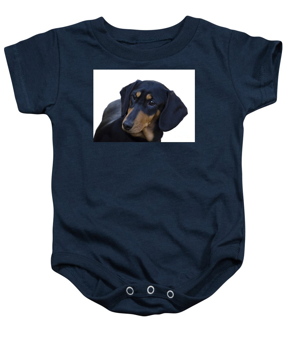 Dog Baby Onesie featuring the photograph Dachshund by Linsey Williams