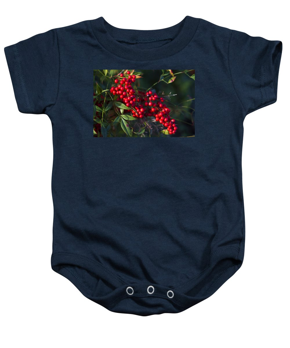 Buzz Baby Onesie featuring the photograph Red Nandina Berries - The Heavenly Bamboo by Kathy Clark
