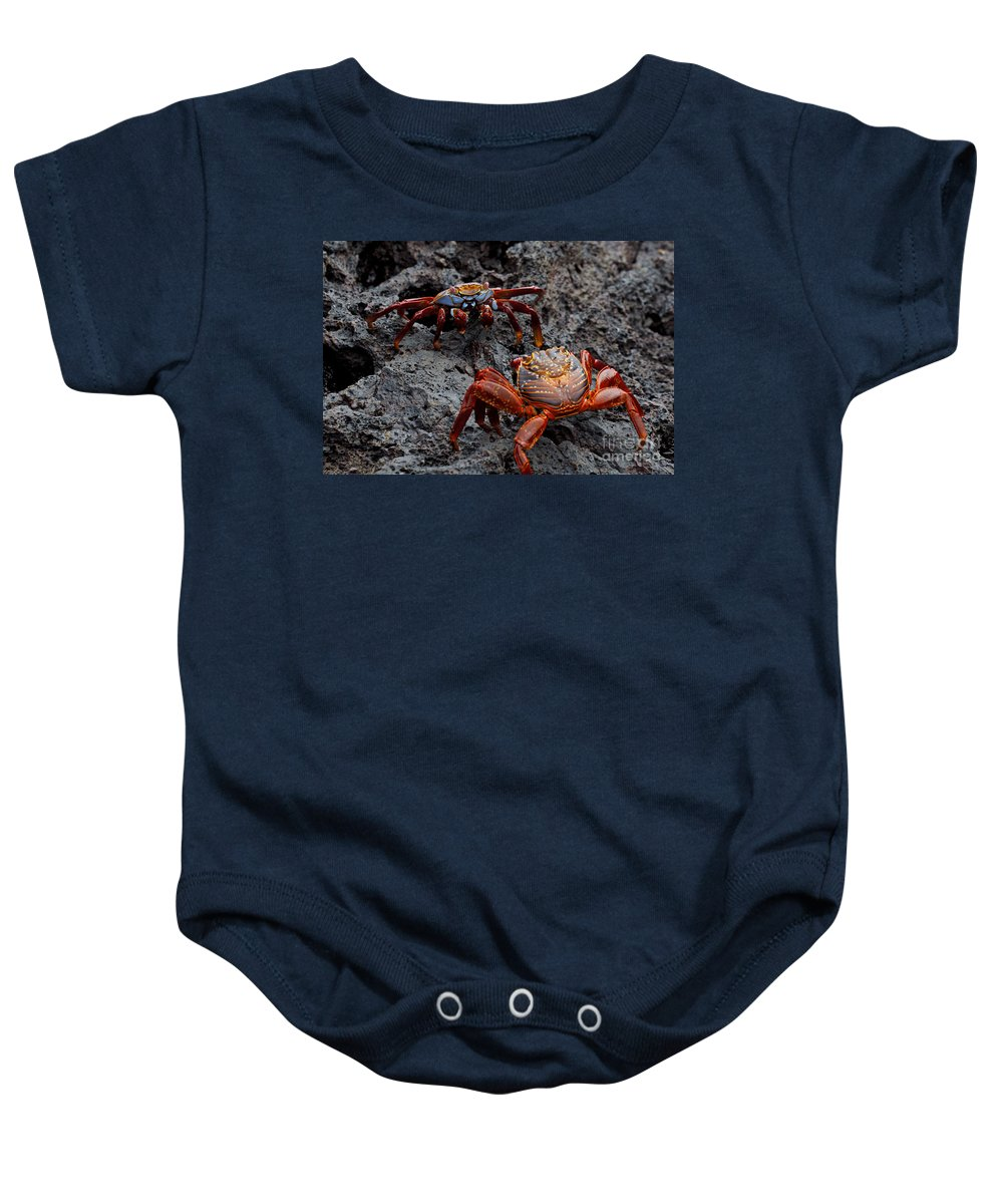 Sally Lightfoot Crab Baby Onesie featuring the photograph Sally Light Foot Crabs Galapagos by Jason O Watson