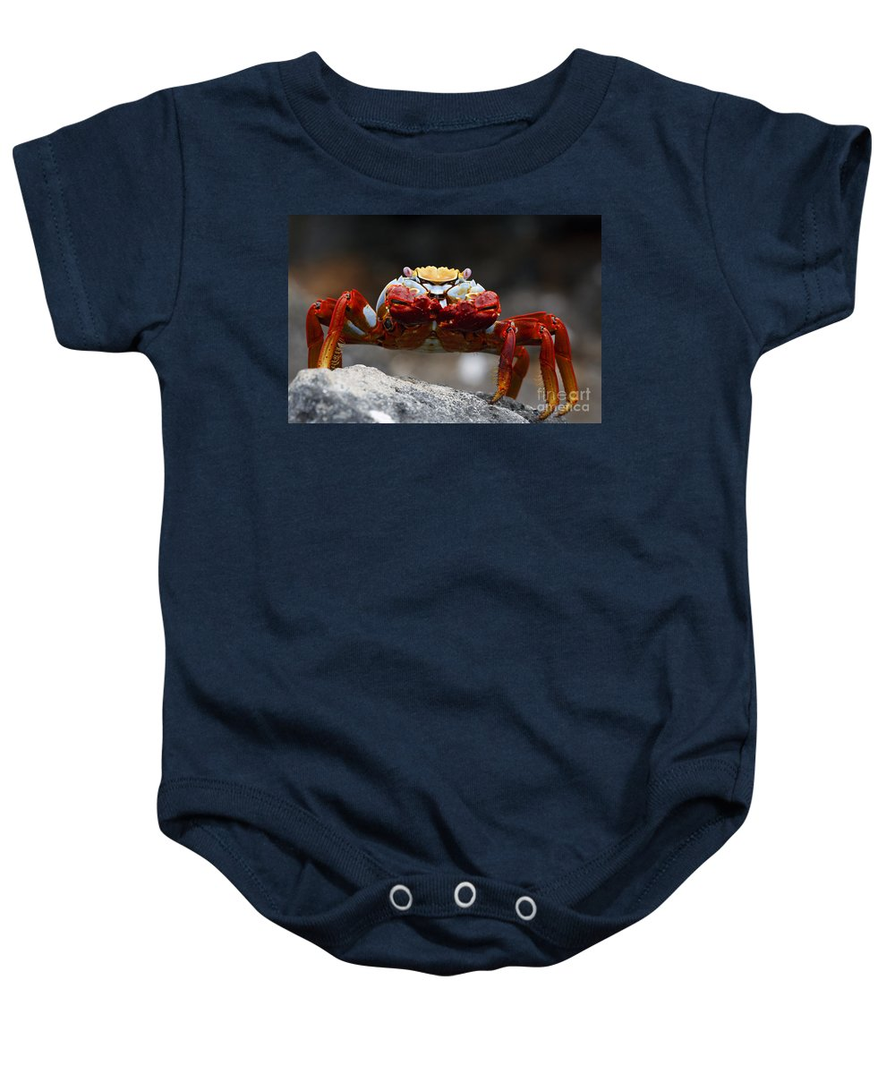 Sally Lightfoot Crab Baby Onesie featuring the photograph Sally Lightfoot Crab Galapagos by Jason O Watson