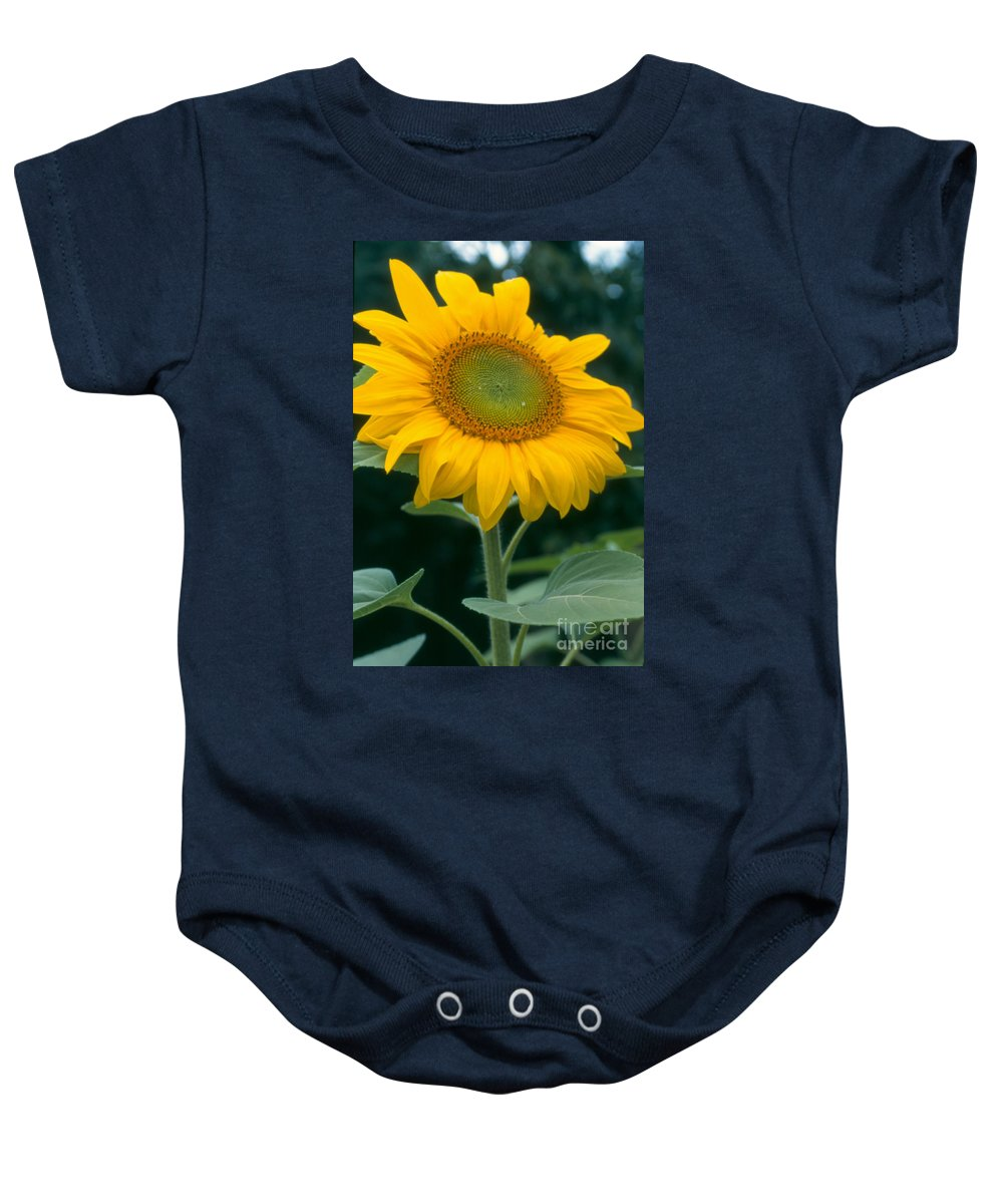 Flower Baby Onesie featuring the photograph Sunflower In Seattle by Heather Kirk