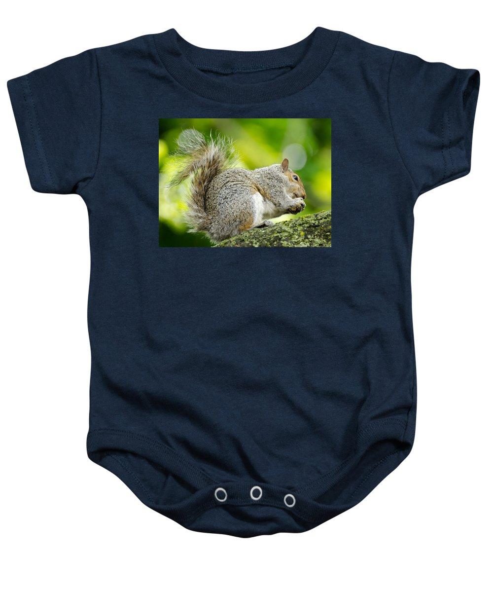 Tree Squirrel Baby Onesie featuring the photograph Tree Squirrel by Ellen Henneke