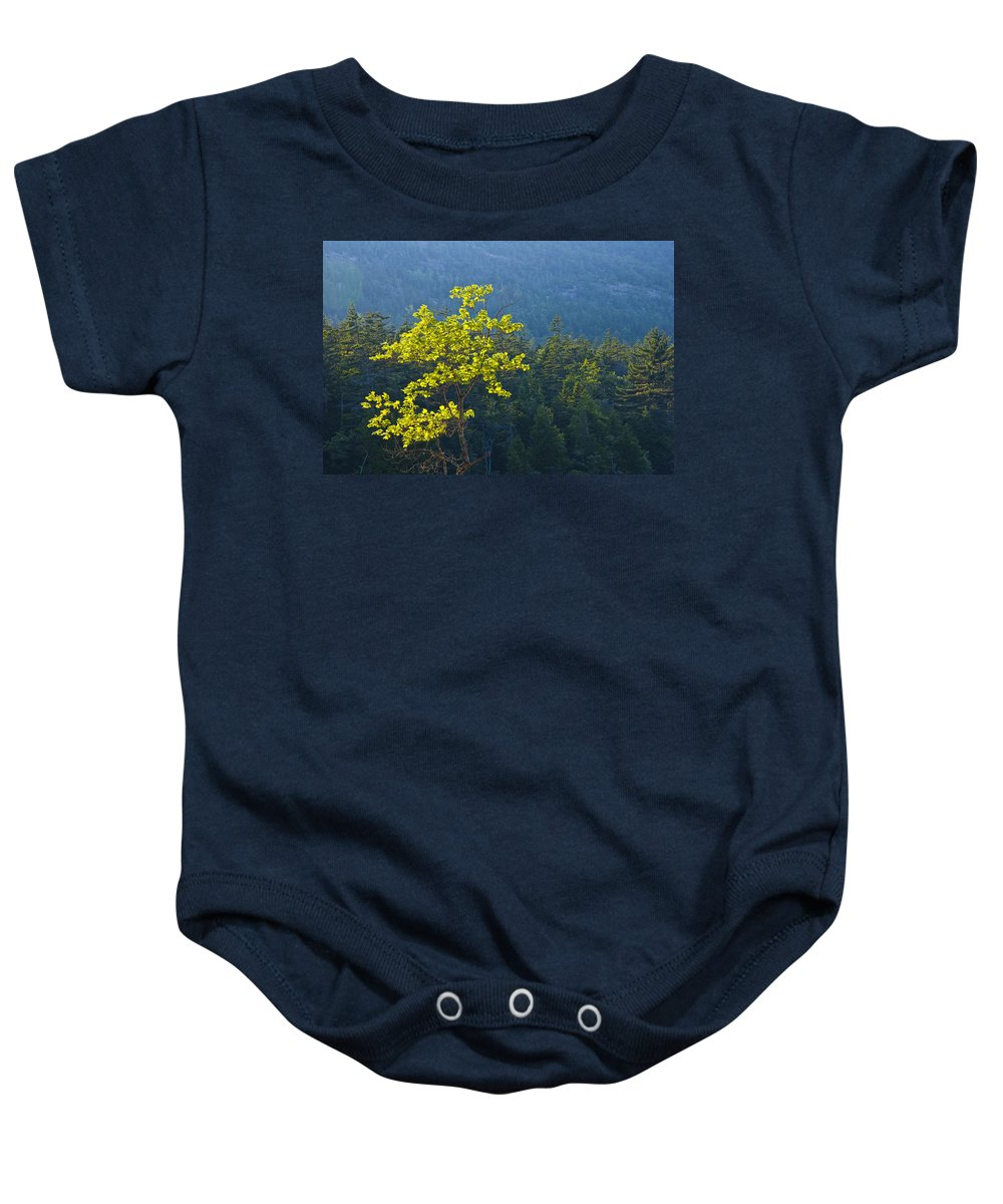 Art Baby Onesie featuring the photograph Tree With Yellow Leaves In Acadia National Park by Randall Nyhof