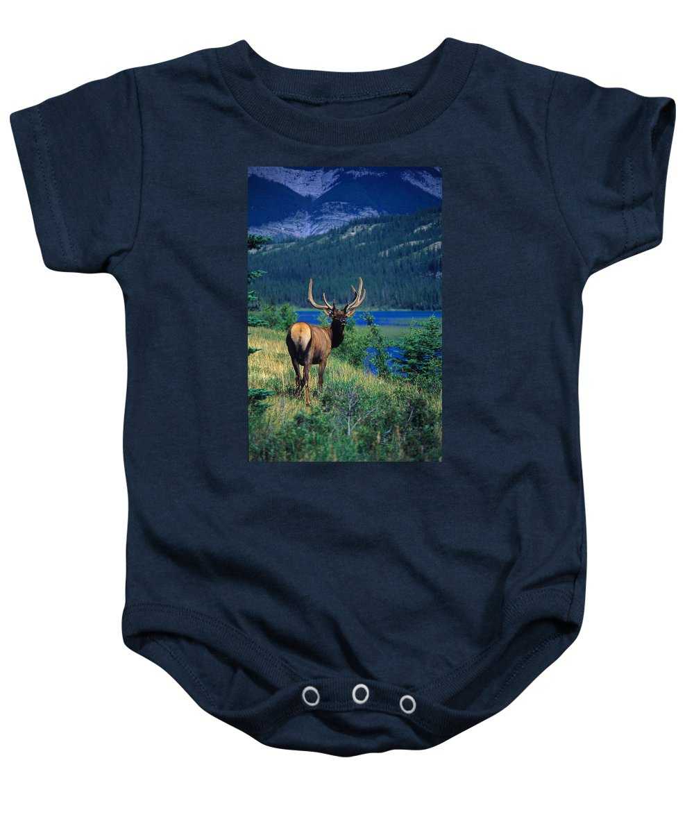 Animal Baby Onesie featuring the photograph Elk In Summer By Mountain Lake by Jason Witherspoon