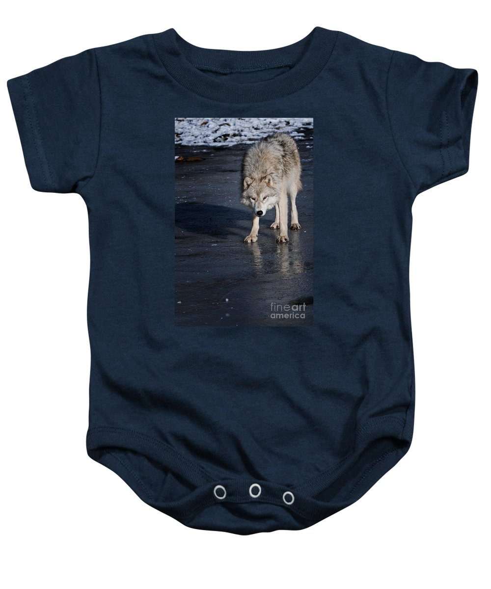 Michael Cummings Baby Onesie featuring the photograph Ice Wolf by Michael Cummings
