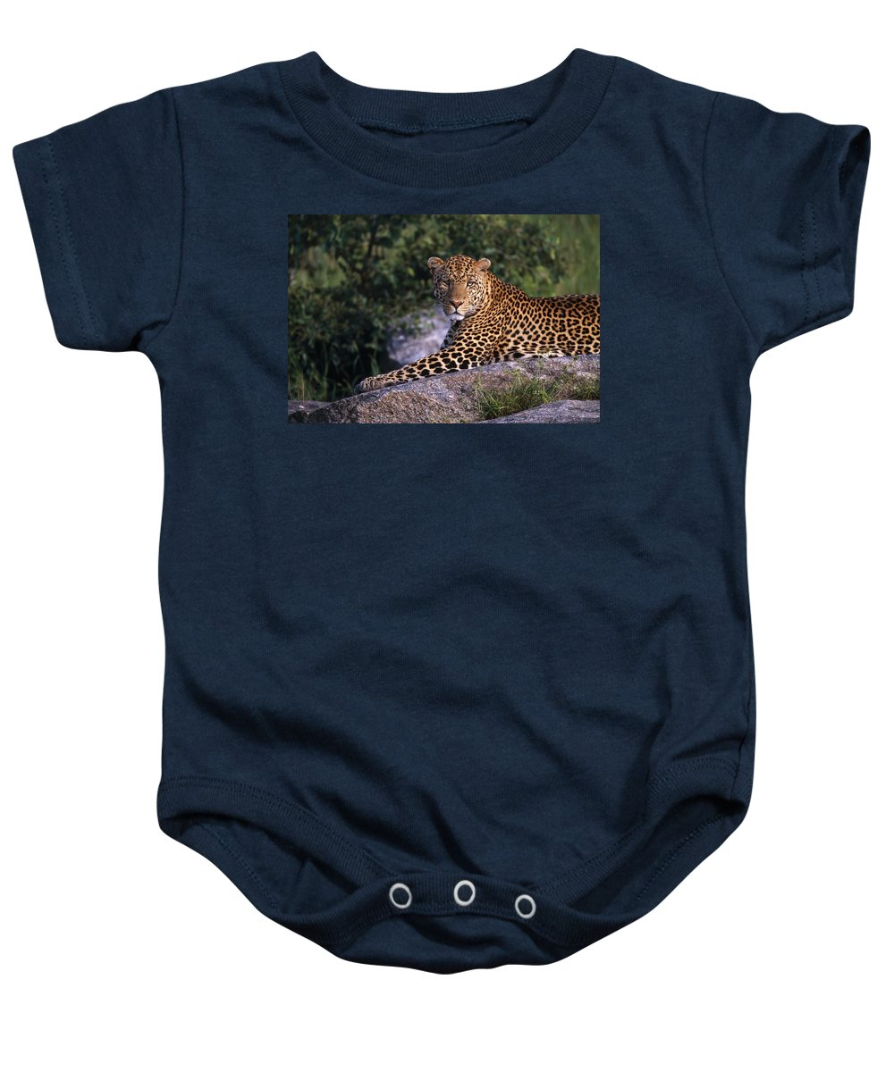 Outdoors Baby Onesie featuring the photograph Leopard Laying On Kopje, Serengeti by Natural Selection David Ponton