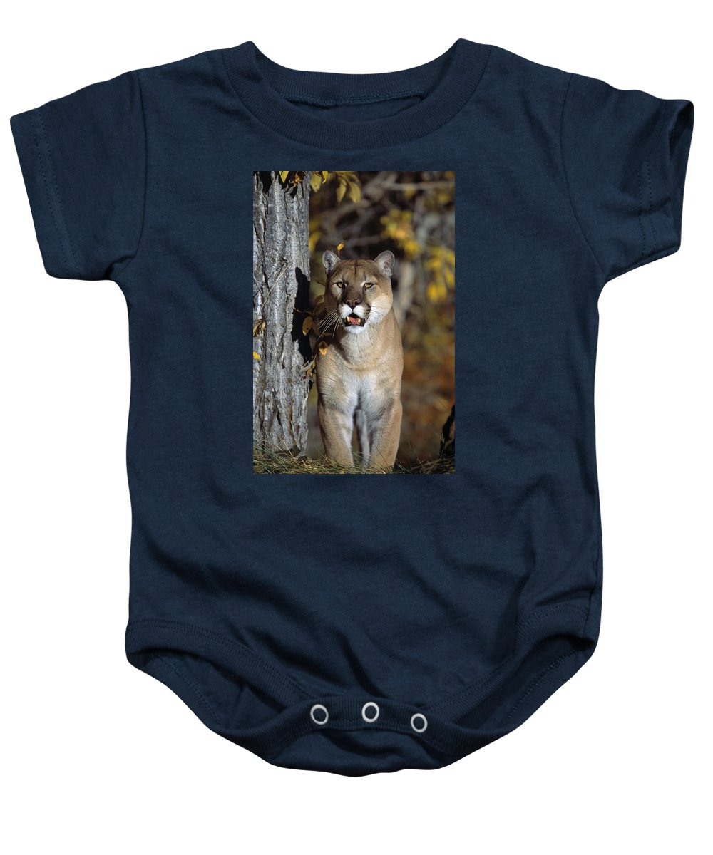Day Baby Onesie featuring the photograph Mountain Lion by Natural Selection David Ponton