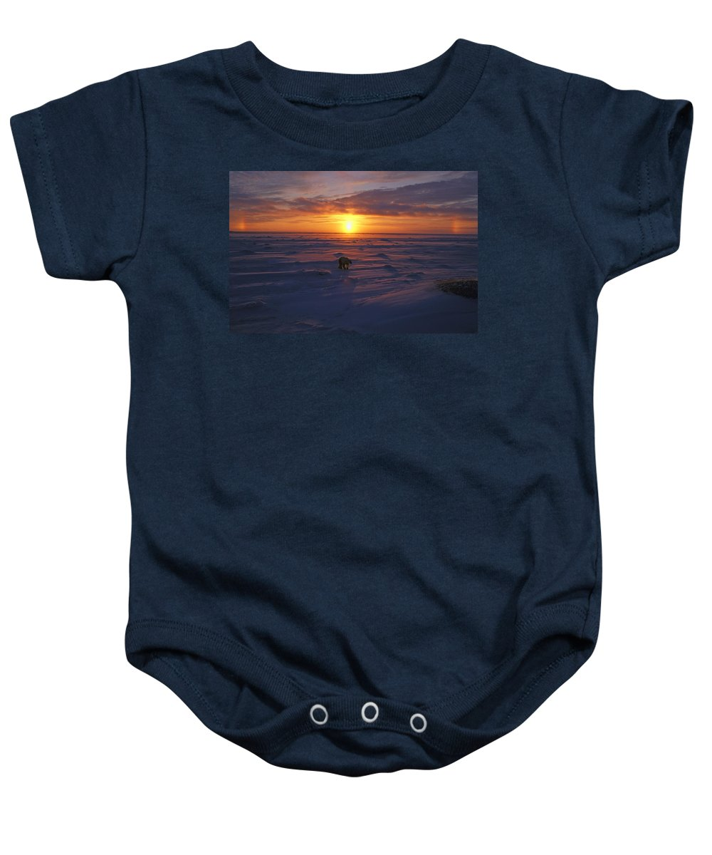 Arctic Baby Onesie featuring the photograph Polar Bear In Arctic Sunset by John Pitcher